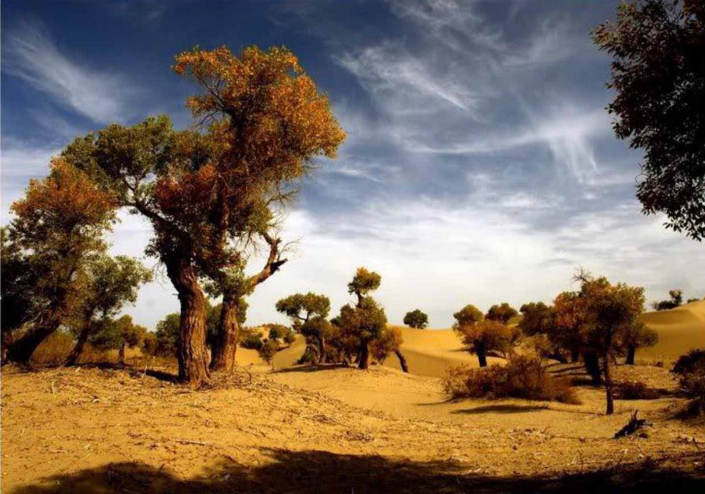 toghrak tree